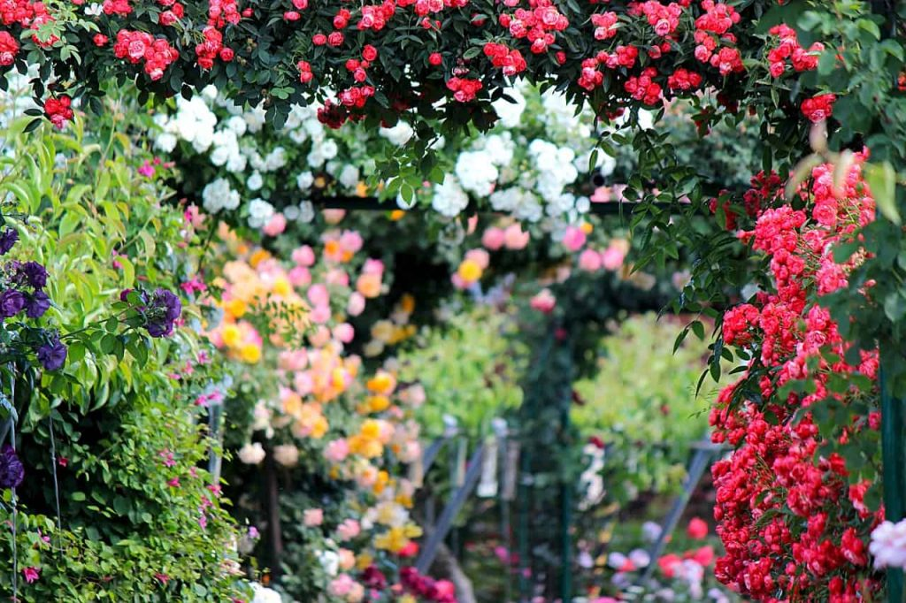 Wymarzony ogród